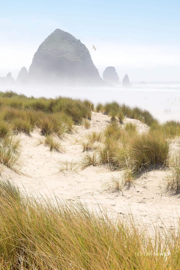 Windy Cannon Beach