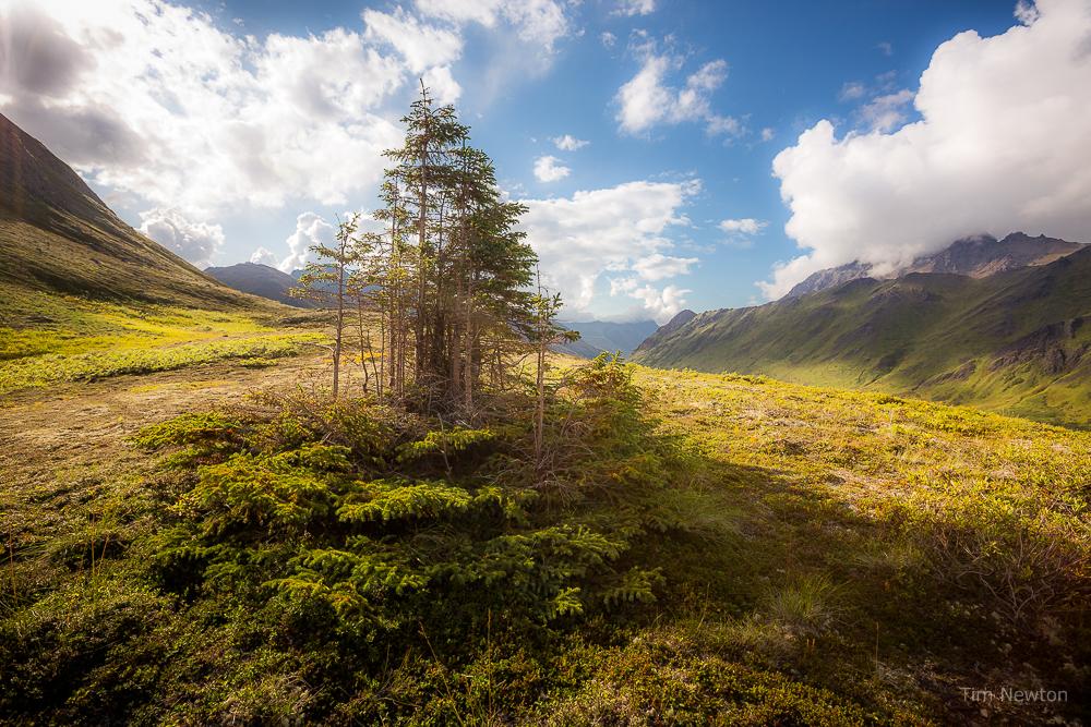 Haiku Forest Copyright_TimNewton
