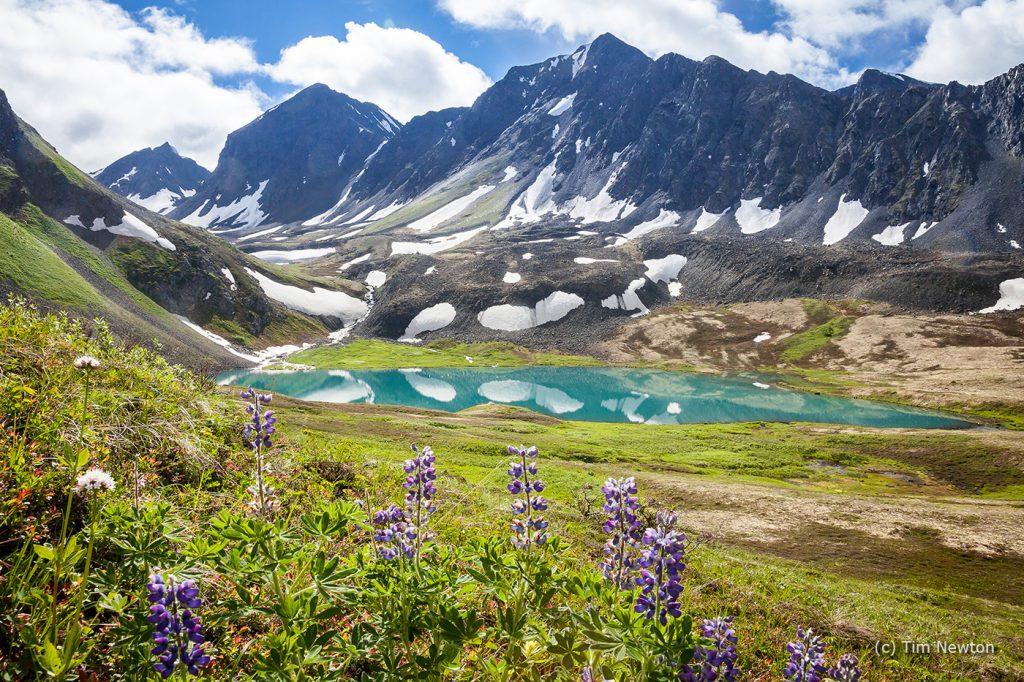 Grizzly Bear Lake Copyright_TimNewton